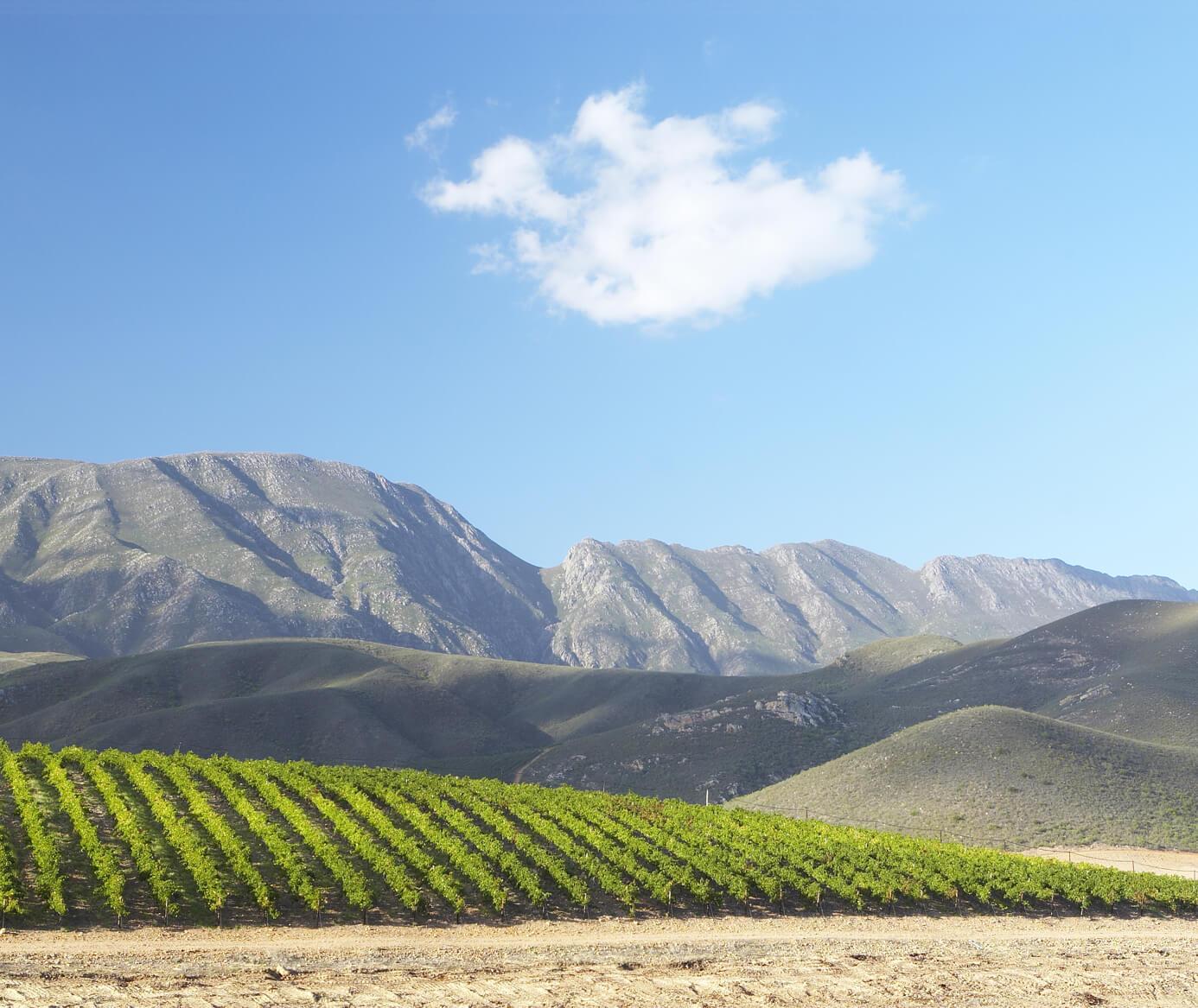 Nine Fields Wines